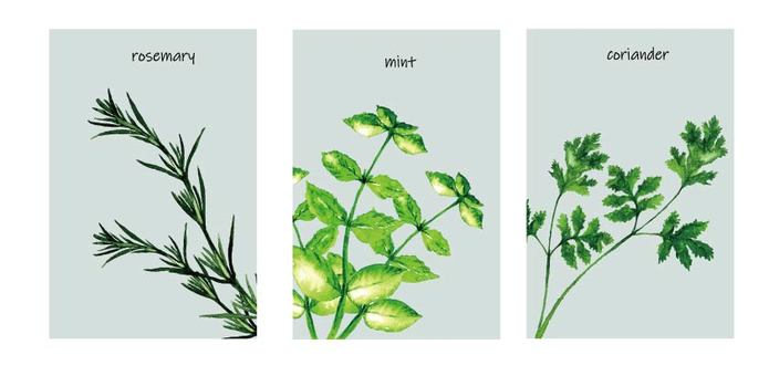 Herb set 3