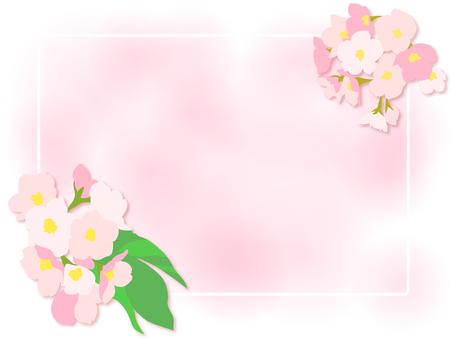 Sakura 23