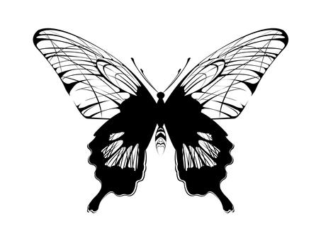 Monochrome butterfly
