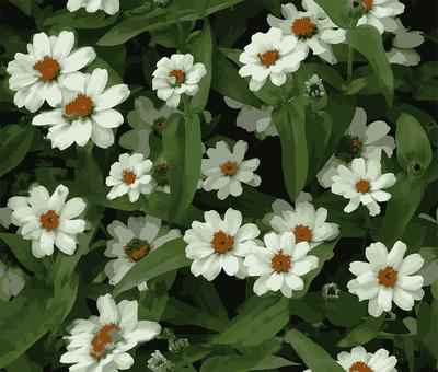 Image for pattern · White flower
