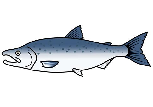 Fish illustration salmon