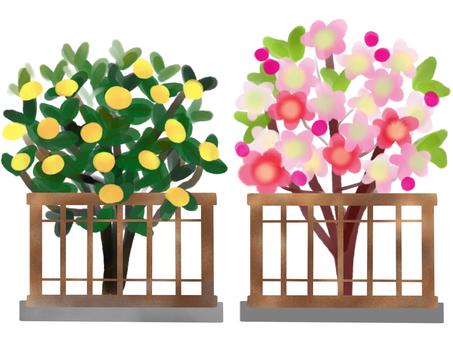 Dolls, Sakura and Tachibana