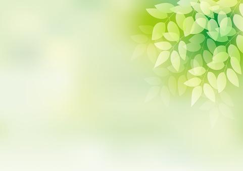 Fresh green 22