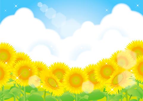 Sunflower and summer sky frame