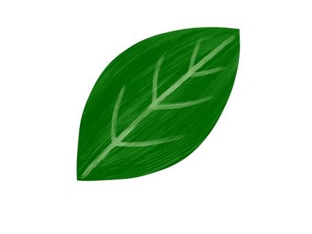 Leaf dark green