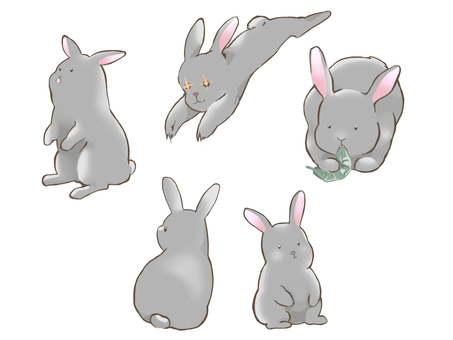 Rabbit navy
