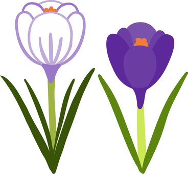 Cute hand-painted crocus