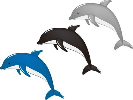 Dolphin different color set