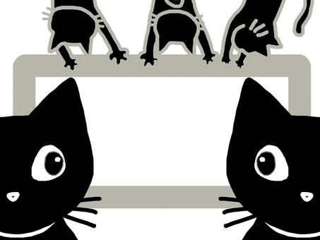 Cat frame frame animal