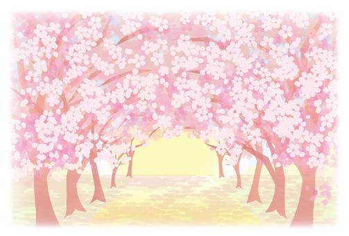 벚꽃의 아치 ~ 희망의 길 ~
