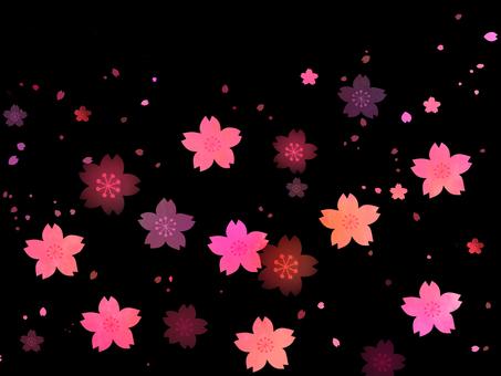 검은 배경의 벚꽃 눈보라
