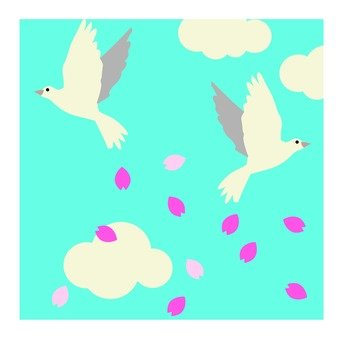 Cherry blossom petals and pigeons