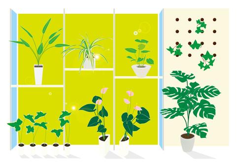 관엽 식물 1610