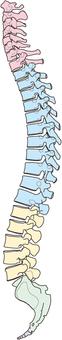 Only vertebral (side) view