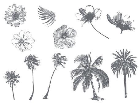 夏イメージの花木植物セット