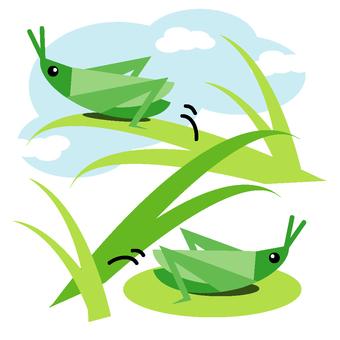 Grasshopper (color)