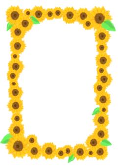Sunflower frame length