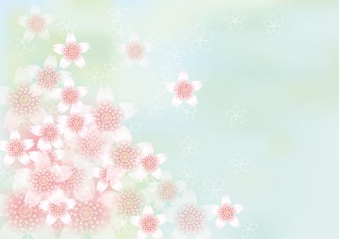 벚꽃의 꽃 116