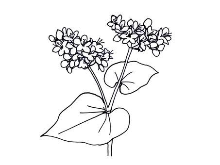 Soba flower black and white -2