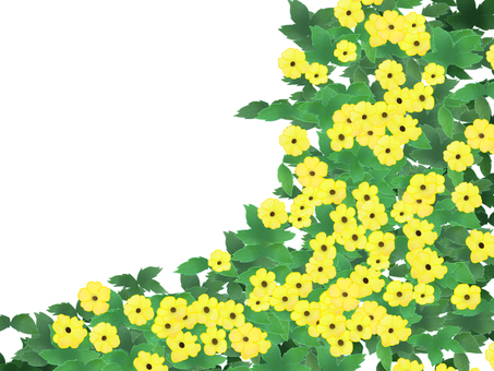 Tsunbergia yellow