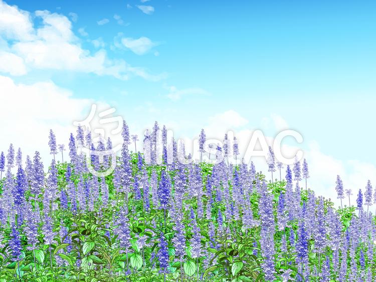 ブルーサルビアの丘のイラスト