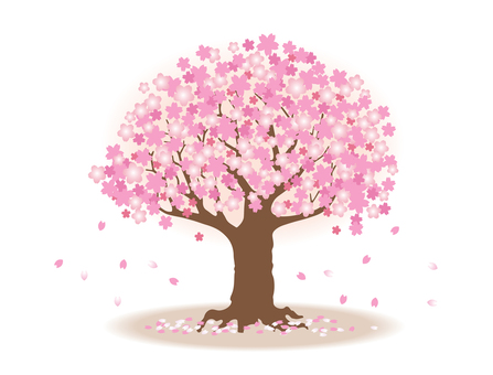 Ikko cherry tree