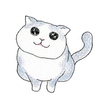 A cat wearing a cat