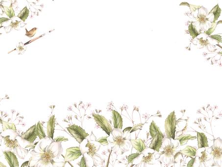 花枠289-白のクリスマスローズの背景