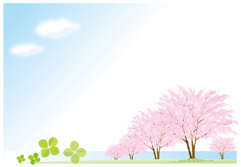 Cherry blossoms and blue sky and clover