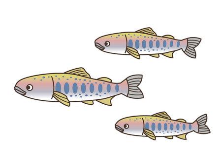 생물 / 산천어