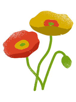 Poppy 001