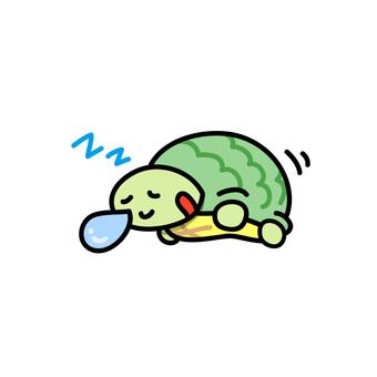Turtle asleep