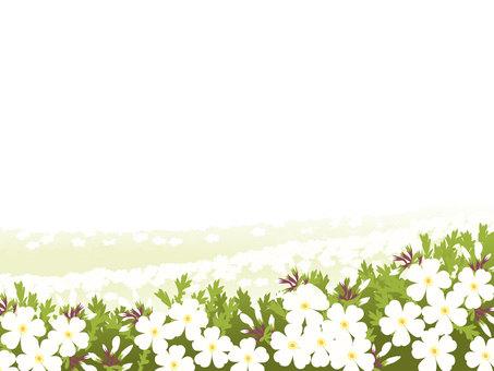 Shiba cherry frame