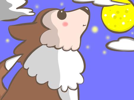 Dog looking up at night sky