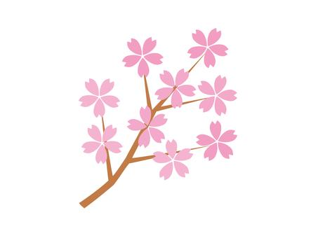 벚꽃 지점