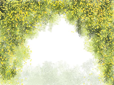 The shade of Carolina jasmine