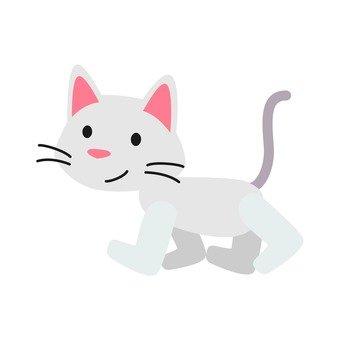 Cat - walking cat