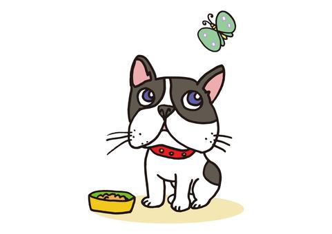 dog_ French bulldog 1