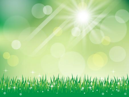 新鮮的綠色草地