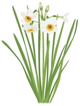 Daffodils / familiar flowers