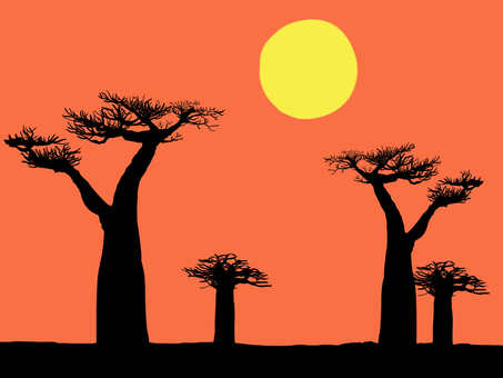 Baobab and the sunset