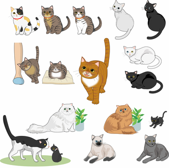 猫 いろいろな種類