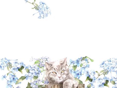 Flower frame 427 Ruri Matsuri and cat flower frame