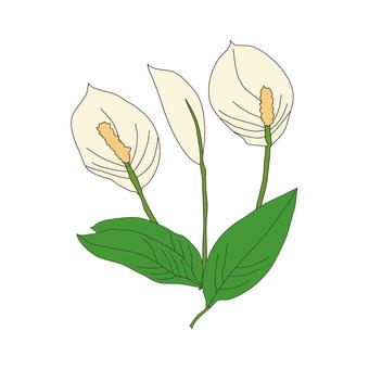 Flower of spiritualum