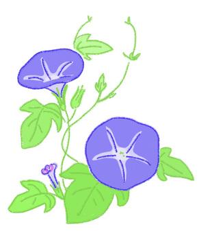 나팔꽃의 꽃