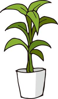 관엽 식물 (용혈)