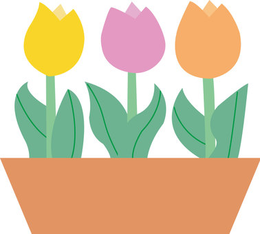 Potted plants - tulip 2