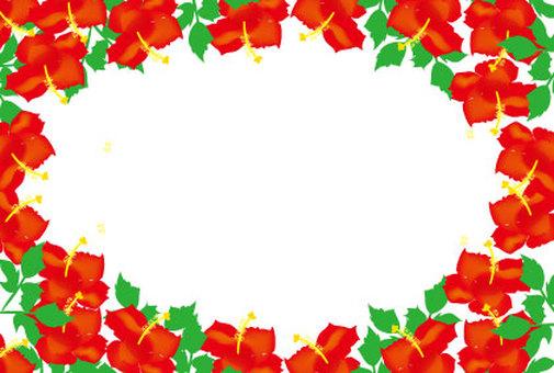 히비스커스는 붉은 여름 꽃의 메시지