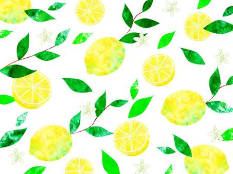 레몬 _ 배경