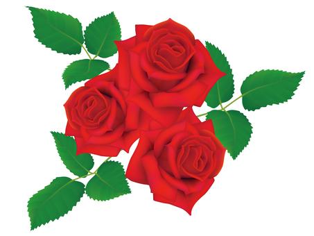 Rose 3 wheel _ red